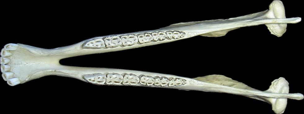 ... autres vues sommaire ostéologie os de la face mandibule autres vues Face